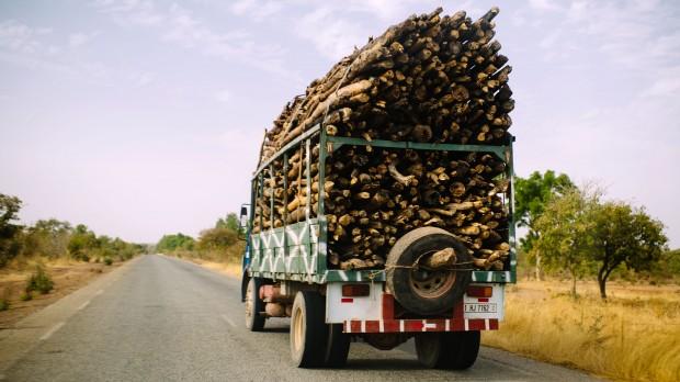 COP 19: Tropiske skove er et kontroversielt emne